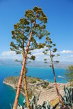 Agave tree, nafplio, greece royalty free stock image