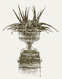 Agave in a vase Royalty Free Stock Image