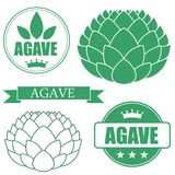 Agave Royalty Free Stock Photos