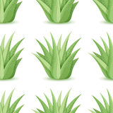 Agave - vector seamless pattern Royalty Free Stock Image
