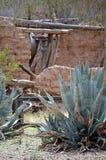 Agave von altem Tucson Stockfoto