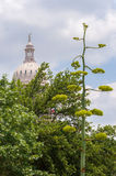 Agave wegens Texas State Capitol Royalty-vrije Stock Foto's