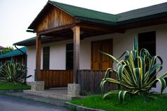 AgaveGiant agave på ingången till byggnaden arkivfoto