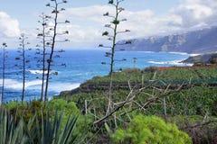 Agaveväxter Arkivbilder