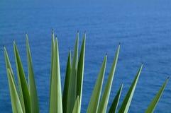Agavo sobre el mar Fotografía de archivo libre de regalías