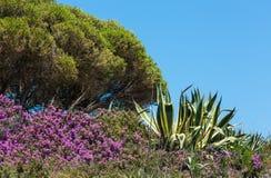 Agaw purpur i rośliny kwiaty Zdjęcia Royalty Free