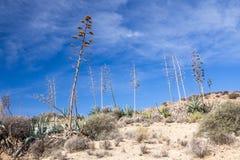 Agaw rośliny, Cabo de Gata, Południowy Hiszpania Obrazy Stock