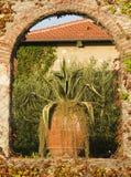 agawa americana Obrazy Stock