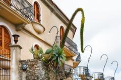 Agawa i Opuntia kaktus w kwiatów łóżkach blisko mieścimy Obrazy Stock