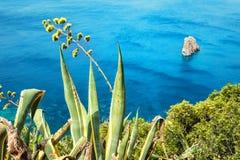 Agawa kwiat i piękny widok tropikalny morze Zdjęcia Royalty Free