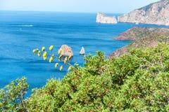 Agawa kwiat i piękny widok tropikalny morze Fotografia Royalty Free