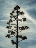 Agawa kwiat na niebieskiego nieba tle Obraz Stock