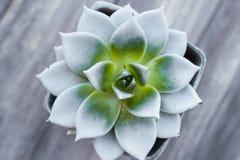 Agawa kwiatu garnka drewniany tło Obrazy Stock