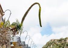 Agawa kwiaty i Opuntia kaktus w kwiatów garnkach Obraz Stock