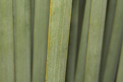 Agawa liścia szczegółu zielony zakończenie up Fotografia Royalty Free