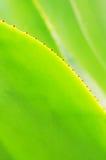 agawa opuszczać verdure Zdjęcia Royalty Free