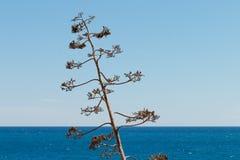 Agawa przeciw morzu Fotografia Royalty Free