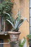 Agawa w garnku ozdabia wejście dom w Rzym Zdjęcia Royalty Free