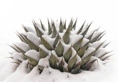 Agawa w śniegu Fotografia Royalty Free