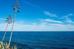 Agawa zasadza blisko błękitnego morza Fotografia Royalty Free