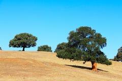agawy Almeria Andalusia cabo de Gata pustynnych krajobrazowych gór natury blisko parka naturalna roślina hiszpańska Obrazy Stock