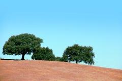 agawy Almeria Andalusia cabo de Gata pustynnych krajobrazowych gór natury blisko parka naturalna roślina hiszpańska Obrazy Royalty Free