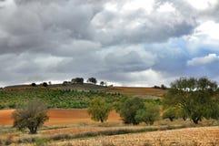 agawy Almeria Andalusia cabo de Gata pustynnych krajobrazowych gór natury blisko parka naturalna roślina hiszpańska Zdjęcie Stock