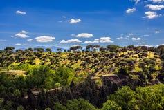 agawy Almeria Andalusia cabo de Gata pustynnych krajobrazowych gór natury blisko parka naturalna roślina hiszpańska drewno Obrazy Royalty Free