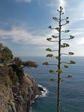 agawy brzegowy Italy śródziemnomorski niewygładzony Obraz Stock
