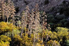 agawy kwitnienia wybrzeża greckich wysp skalisty brzeg Zdjęcie Royalty Free