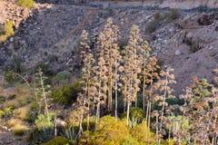 agawy kwitnienia wybrzeża greckich wysp skalisty brzeg Fotografia Stock