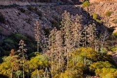 agawy kwitnienia wybrzeża greckich wysp skalisty brzeg Zdjęcia Royalty Free