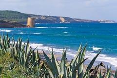 Agawy morzem Obrazy Royalty Free