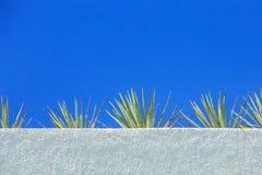 Agawy niebieskie niebo i roślina Obraz Stock