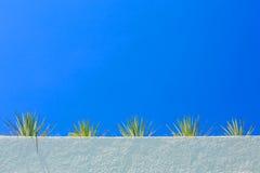Agawy niebieskie niebo i roślina Fotografia Royalty Free