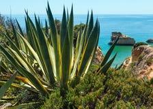 Agawy roślina na wybrzeżu Zdjęcie Royalty Free