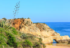 Agawy roślina na wybrzeżu Fotografia Royalty Free