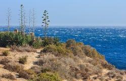 Agawy roślina na wybrzeżu Zdjęcia Stock