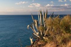 agawy roślina Costa Brava, Hiszpania Zdjęcia Royalty Free