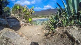 Agawy roślina morzem w Sardinia Obraz Royalty Free