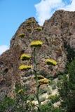Agawy roślina w pustyni Zdjęcia Royalty Free