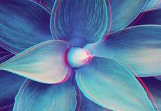 Agawy roślina z glitched out wykonuje kwiecistego turkusu wzór Zdjęcie Royalty Free