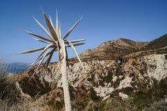 agawy wyspa Zakynthos Obrazy Stock