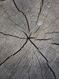 Wood, gray, old, age, material, texture, crack, wood, rings, uniqueness Royalty Free Stock Photos