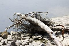 Age dried trunk, alluvial on the shore of the lake, flotsam. And jetsam Stock Photos