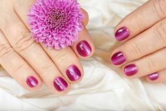 Age manicure for senior woman. Hands with pink nails. Age manicure for senior woman. Hands with pink nails and daisy flower Stock Photos