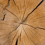 Aged bark. Years concentric circles Stock Images