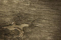 Aged Bark Stock Images