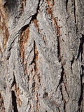 Aged bark Stock Photography