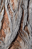 Aged bark 3 Royalty Free Stock Photography